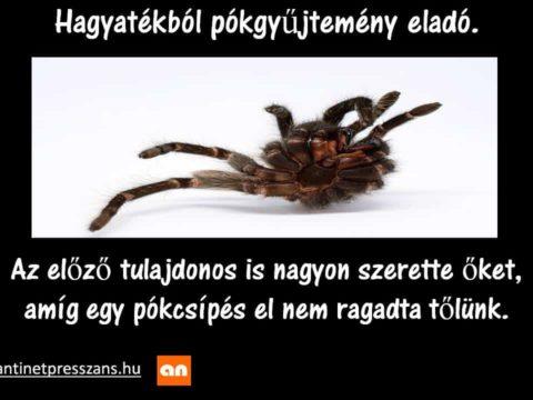 Pók humor Urszinyi Fehér Csaba