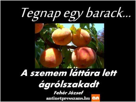 Poénos szóvicc humor Fehér József