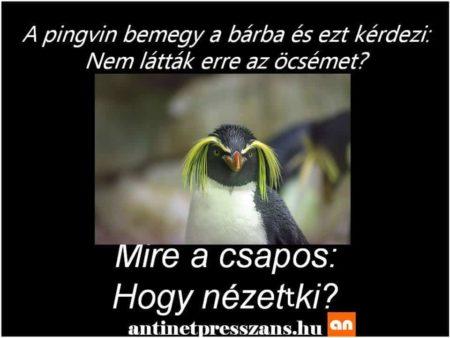 Pingvin Humor