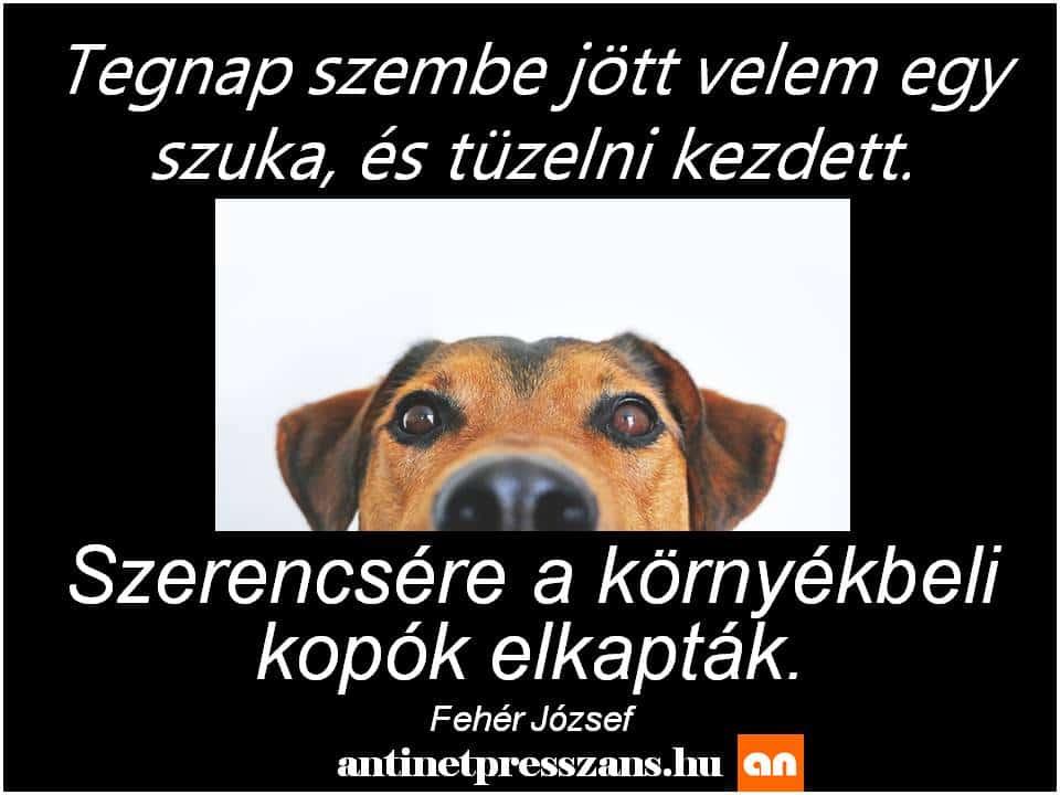 Kutya poén humor Fehér József