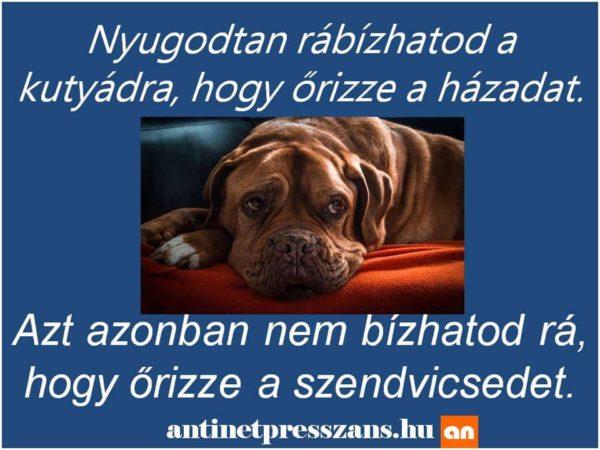 Humoros kutya poén