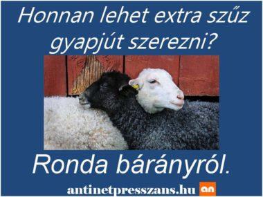 vicces bárányok