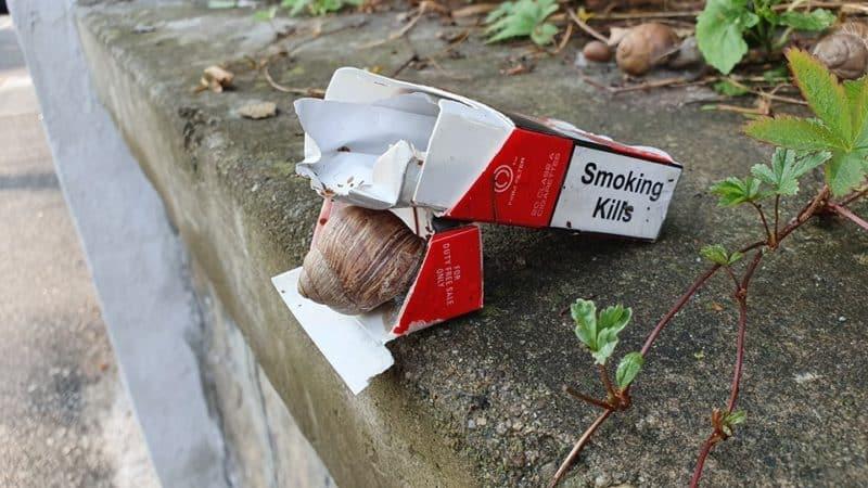 Dohányzás humor
