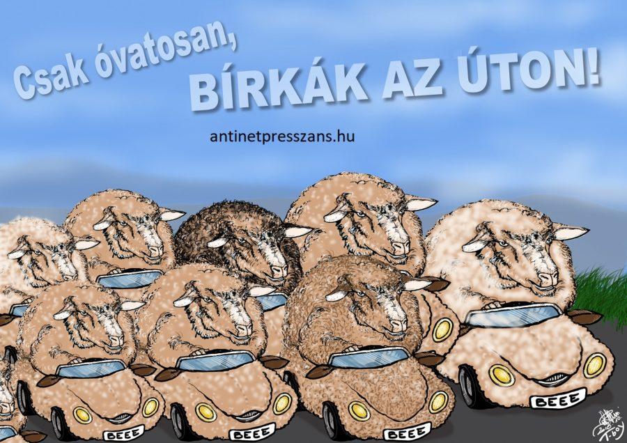 Vicces vezetési stílus karikatúra