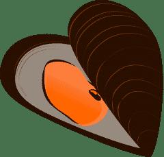 Vicces kagyló ismertető