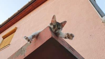 humoros macska poén